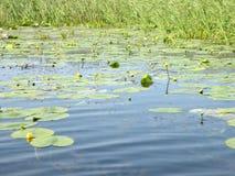 Delta di Danubio nella metà dell'estate Fotografia Stock