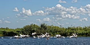Delta di Danubio in Romania fotografia stock libera da diritti