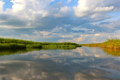 Delta di Okavango Immagini Stock