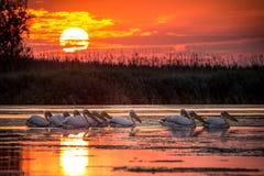 Delta Dunarii, Romania. At sunset stock photos