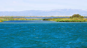 Delta of Ebro river in summer Stock Image