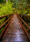 Delta Forest Footbridge. Footbridge in the old growth forest at Delta Campground near Blue River, OR stock photos
