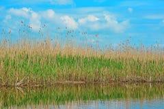 Delta het rietmening van Donau stock foto
