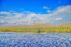Delta het rietmening van Donau met dramatische hemel Royalty-vrije Stock Foto