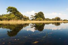Delta inundado de Okavango fotos de stock