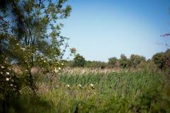 Delta landscape Stock Images