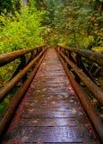Delta lasu Footbridge Zdjęcia Stock