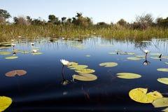 Delta okavango 免版税图库摄影