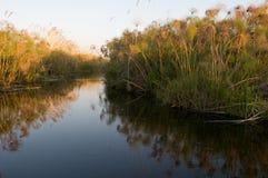Delta okavango河 免版税库存照片