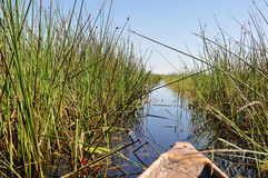 Delta Okavango Stock Photography