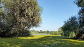 Delta scenery. Very beautiful scenery in the Danube Delta with a lot of greenery and a clear atmosphere and a blue sky Royalty Free Stock Images