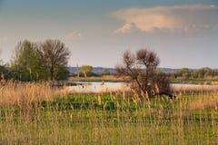 Delta spring. Stock Photos