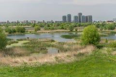 Delta van Boekarest Royalty-vrije Stock Foto
