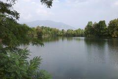 Delta van een rivier met bomen Stock Foto's