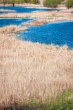 Delta vegetation Stock Images