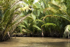 Delta Vietnam del Mekong imagenes de archivo