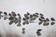 Deltadel pà ², grupp av regn-droppar som vilar i ett träsk Royaltyfri Fotografi