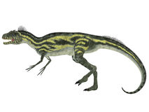 Deltadromeus Side Profile. Deltadromeus was a theropod carnivorous dinosaur that lived in Northern Africa during the Cretaceous Period royalty free illustration