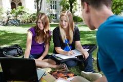 deltagare som tillsammans studerar Arkivbild