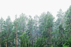 Deluges of rain in forest Royalty Free Stock Images