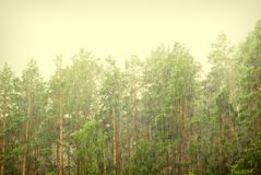Deluges of rain in forest Royalty Free Stock Image