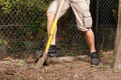 Delve of spade. A man is starting his garden work with a delve of spade Stock Photo