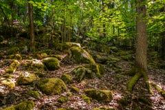 Delvis solig skogsikt med mossa, stenar, ljusa blad och träd Arkivbild