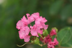 DEM κάτω από τα λουλούδια στοκ φωτογραφία