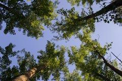 dem Himmel vom Boden oben betrachten lizenzfreies stockfoto