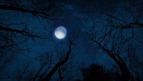 dem Mond und den Bäumen oben betrachten stock video footage