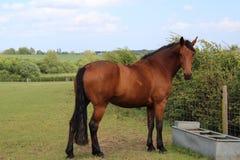 In dem schönes Pferd Pferdeaufpassende Kamera lizenzfreie stockbilder