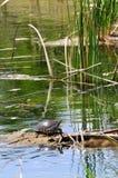 In dem Teich Lizenzfreies Stockbild