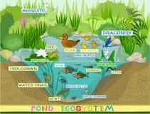 In dem Teich stock abbildung