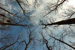 dem trockenen Baum des Himmels oben betrachten Lizenzfreie Stockbilder