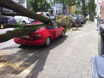 Tree damaged Car at Hurricane Stock Photo