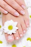 Demande de règlement de beauté pour les mains et les feets femelles image stock