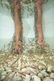 Demande de règlement de pédicurie de station thermale de poissons Images stock