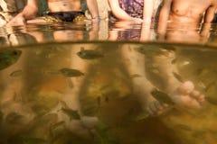 Demande de règlement de soins de la peau de pédicurie de pieds de station thermale de poissons Image libre de droits