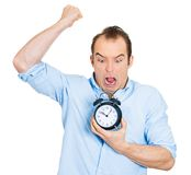 Demanding boss, deadline. Closeup portrait of angry mad demanding boss business man funny looking guy holding alarm clock, screaming, requesting employees to be Stock Photos
