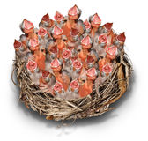 Demanding Citizens. Concept and social media symbol as a crowd metaphor with a big chaotic group of baby birds in a giant nest complaining to get services stock illustration