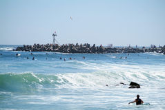 Demasiadas personas que practica surf Fotografía de archivo libre de regalías