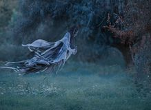 Dementor flies through the air with waving mantle into the forest above the lawn with emerald frozen grass covered with royalty free stock photography