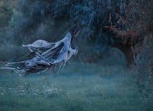 Dementor flyger till och med luften med det vinkande ansvaret in i skogen ovanför gräsmattan med smaragden fryst gräs som täckas  royaltyfri fotografi