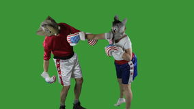 Democratic party knock-out. Woman in donkey Democrat mask wearing boxing shorts delivering a knock-out punch to a man wearing a GOP elephant mask against green