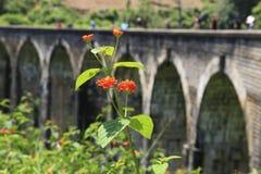 Demodara Nine Arch Bridge. Ella, Sri Lanka Stock Photo
