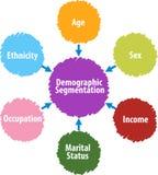 Demographic segmentation business diagram illustration Stock Images