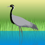 Demoiselle Crane Flat Design Vector Illustration Image libre de droits