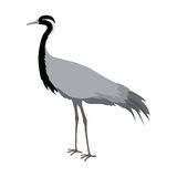 Demoiselle Crane Flat Design Vector Illustration Photo libre de droits