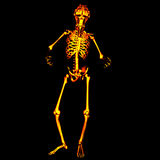 Demon Skeleton 2. Demon Skeleton with a menacing look and a fiery texture.  Happy Halloween Royalty Free Stock Images