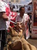 demonstraci zwierzęca opieka społeczna Fotografia Royalty Free